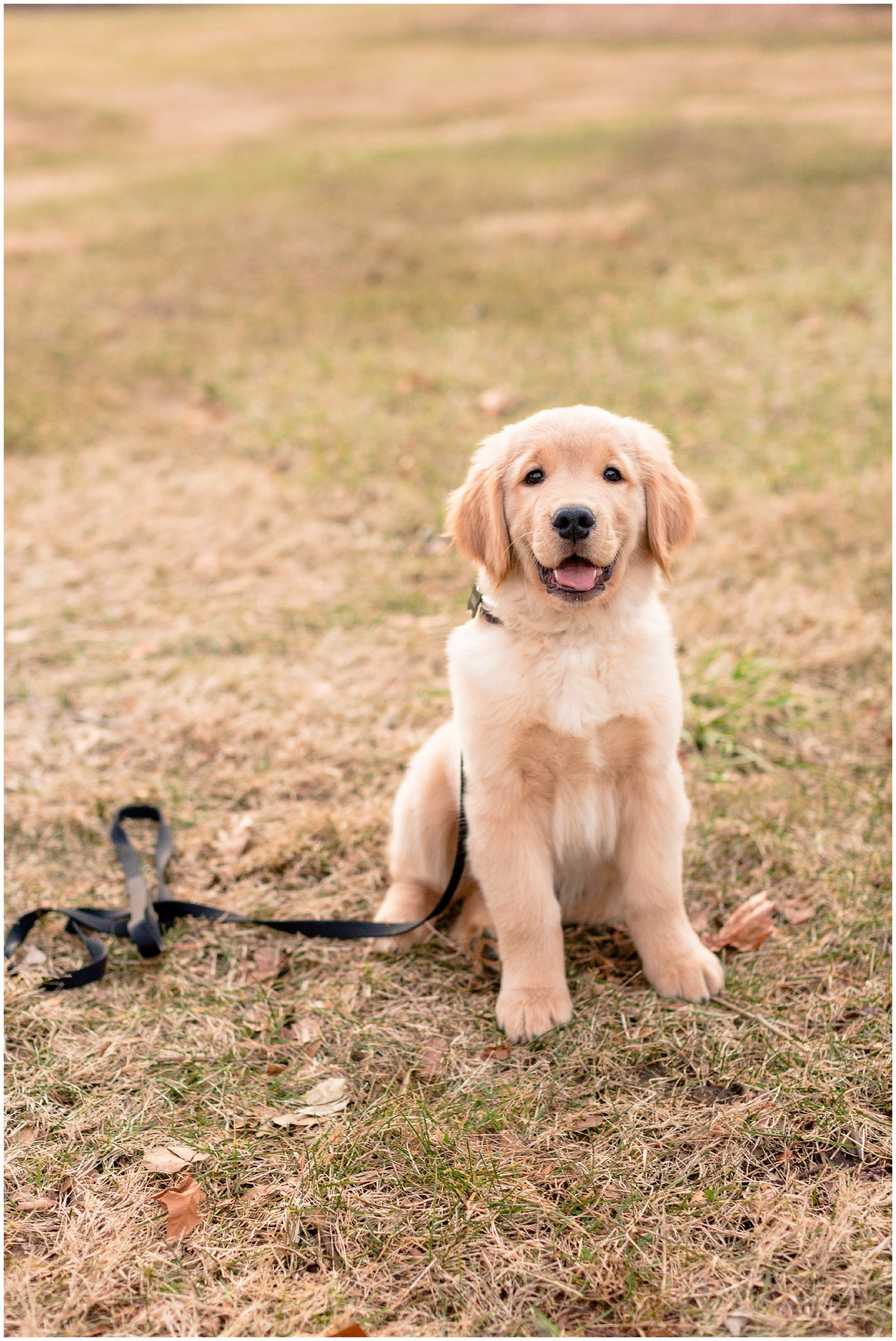 Engagement Photo Outfit Inspo with Golden Retriever Puppy Normal Illinois_0080