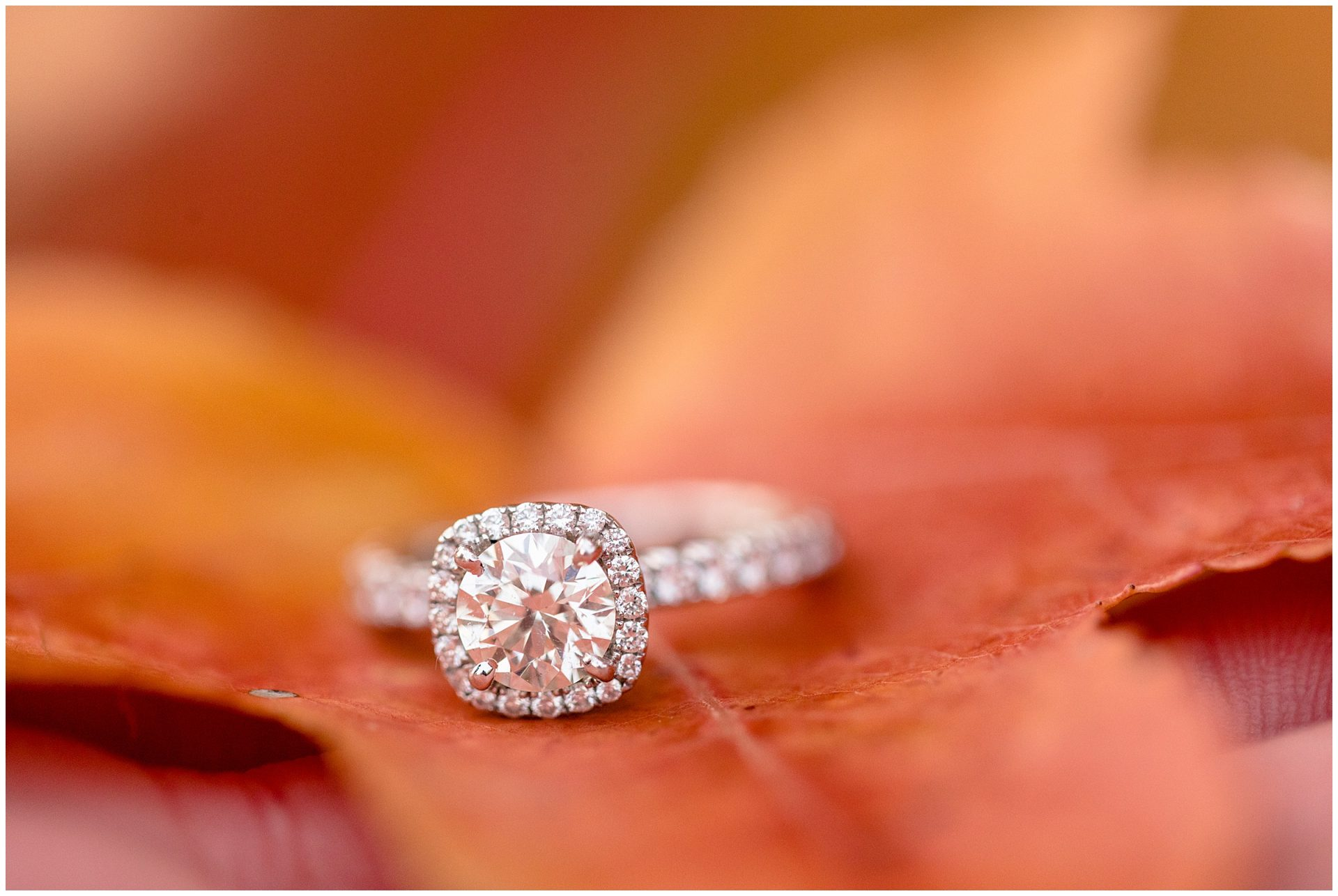 Comlara Evergreen Lake Engagement_0860